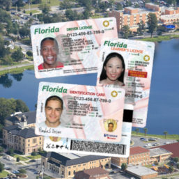 Photo of new Florida Driver Licenses
